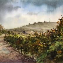 vineyards in autum