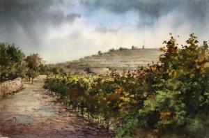 vineyards in autum Siggiewi - Malta